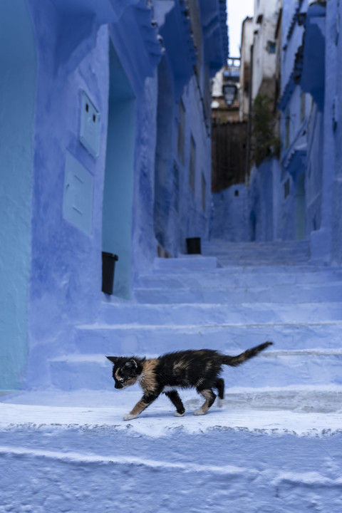 BLUE LABYRINTH  ー chaouen with a cat ー