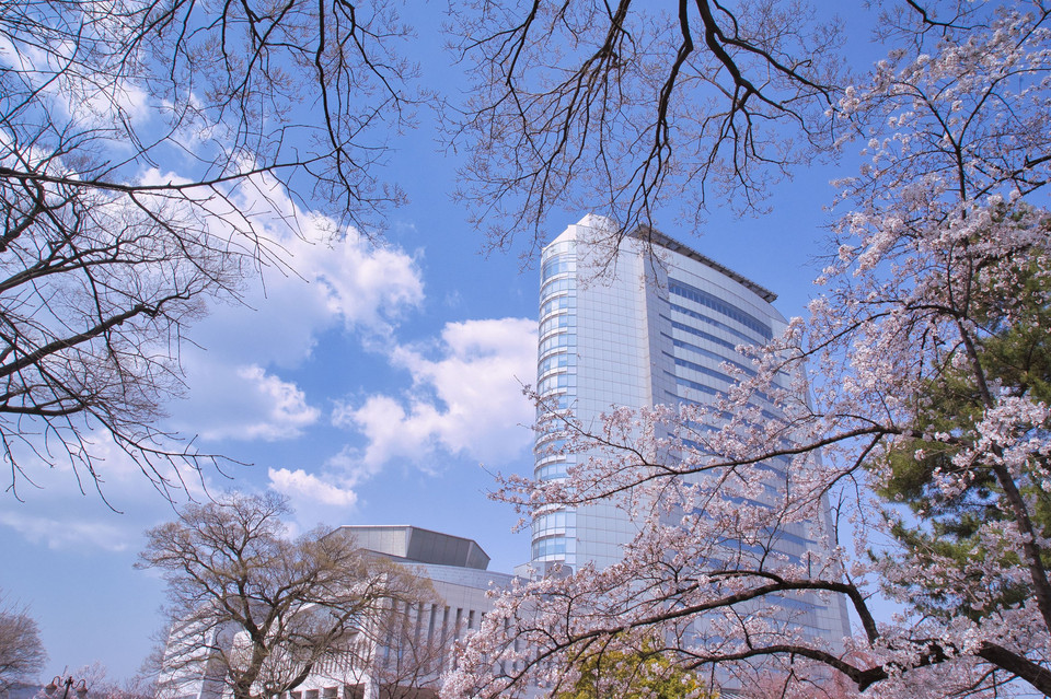 City hall and cherry blossoms