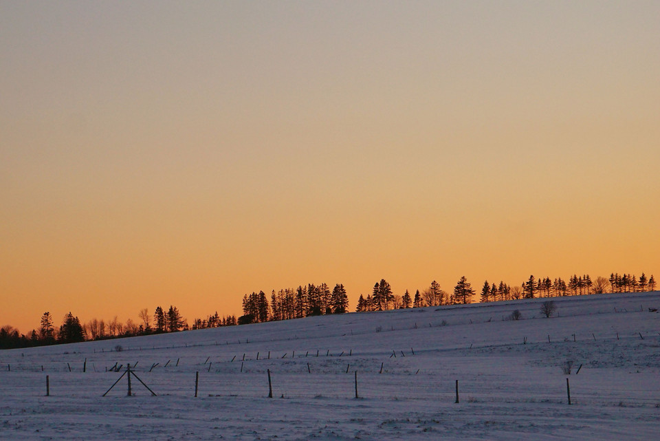 tree line sunset