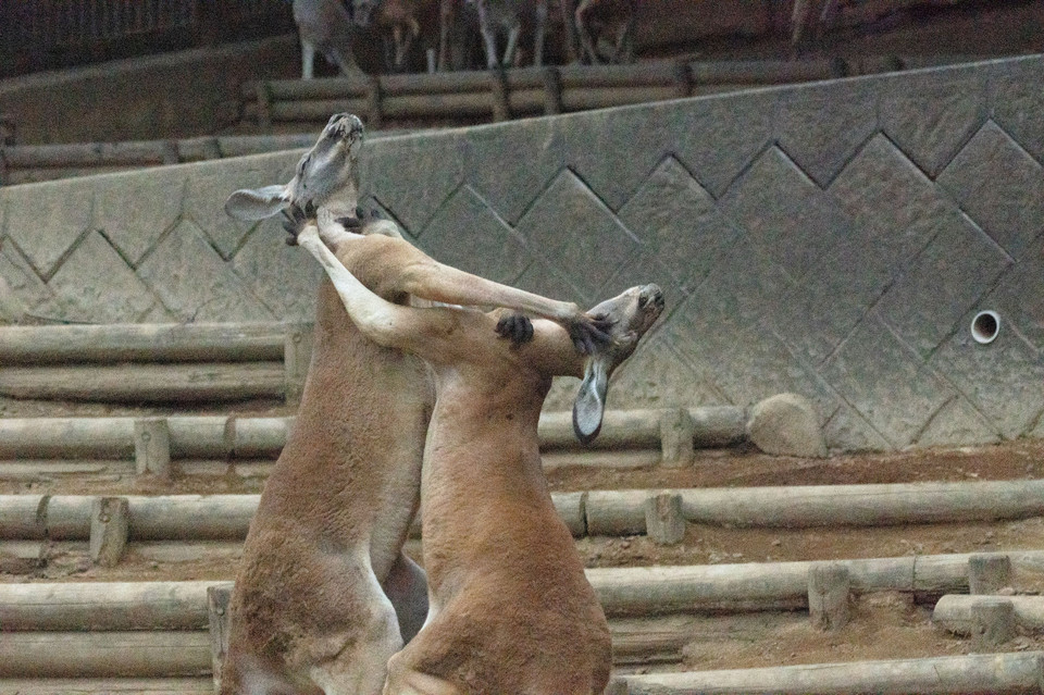 Night Zoo 〜 多摩動物公園 〜