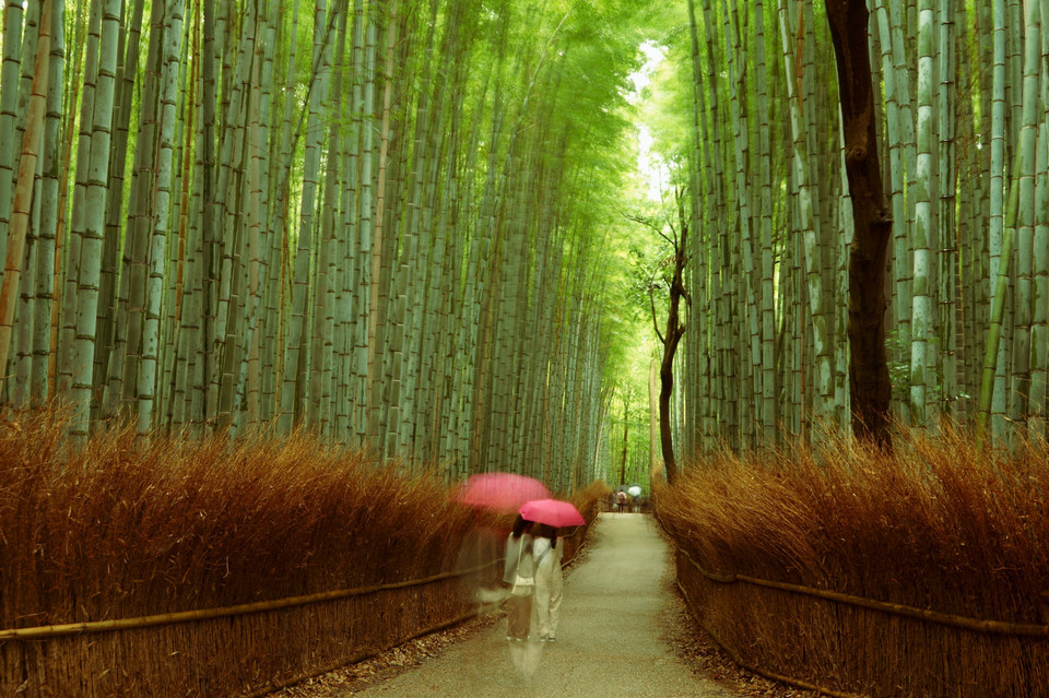 Rainy Road of Bamboo Forest