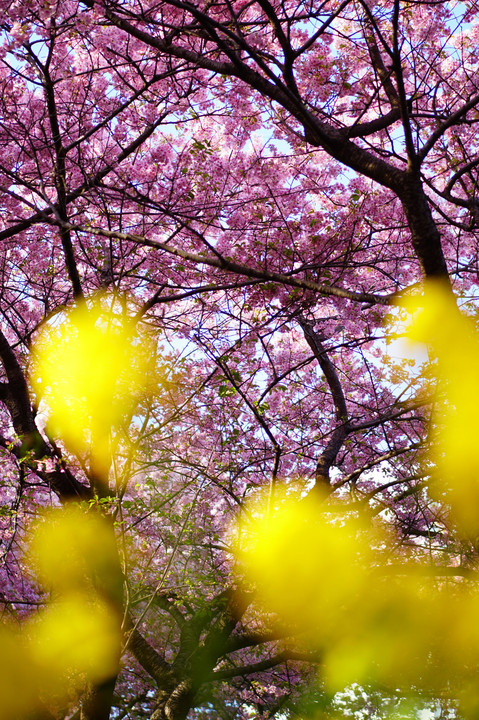 Pink&Yellow