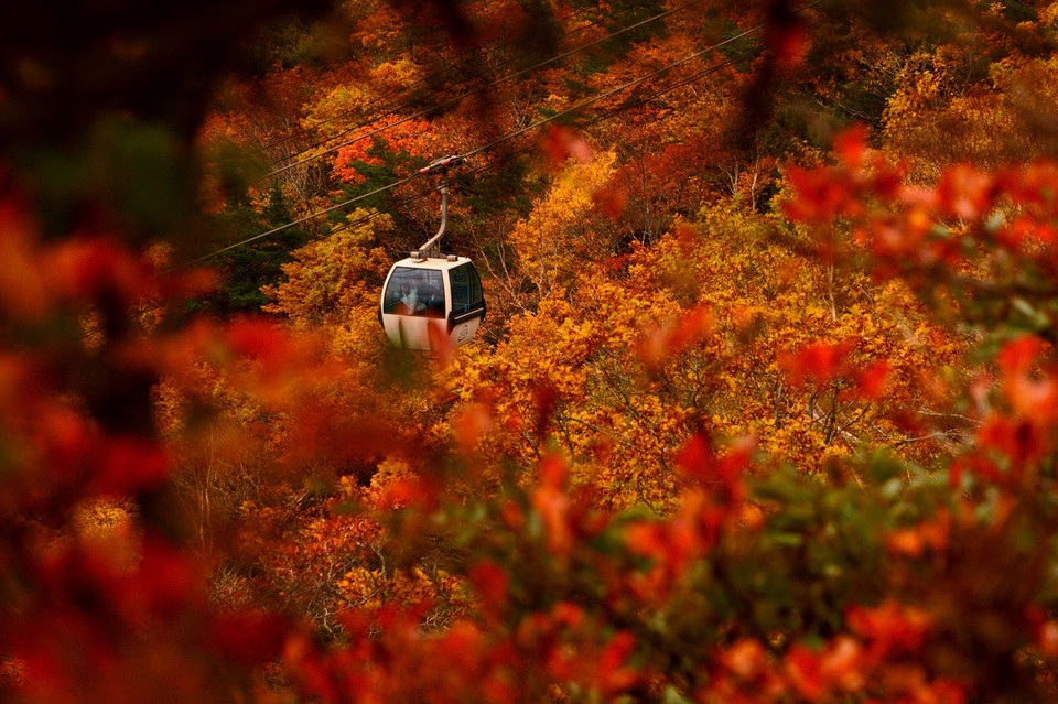 in the  Autumn Leaves  安達太良山