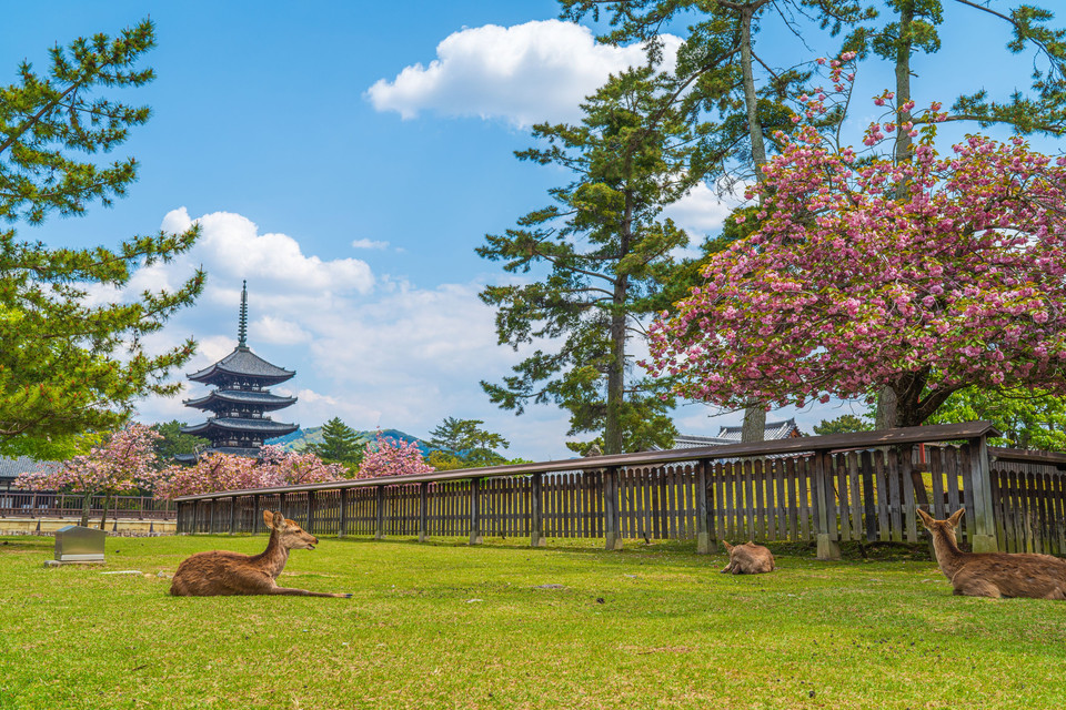 Typical Nara spring view