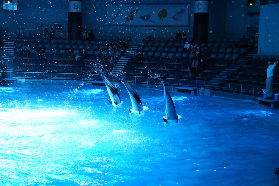 Dolphins fly high and jump into the water
