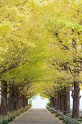 autumn photo -keio univ. hiyoshi campus-