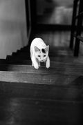 A cat on the stairs...