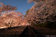 SAKURA INCLINE