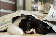newspaper cat Ⅱ