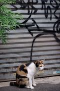 Graffiti&Cat