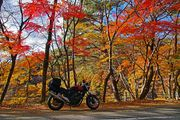 Autumn touring