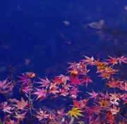 Autumn leaves and pond