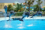 Fantastic Dolphins!