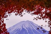 Momiji of Mount *Fuji