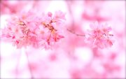 Spring Is in The Air-春めく-