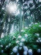 Flowers blooming in the forest(10枚組)