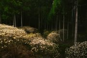 Glowing forest / 光る森