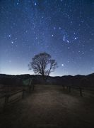 """ Lonely Tree with Orion  """
