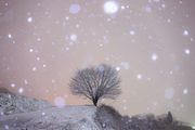 firstSNOW × tree
