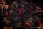 Autumn Colors in NikkoⅡ