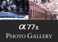 α7II Photo Gallery